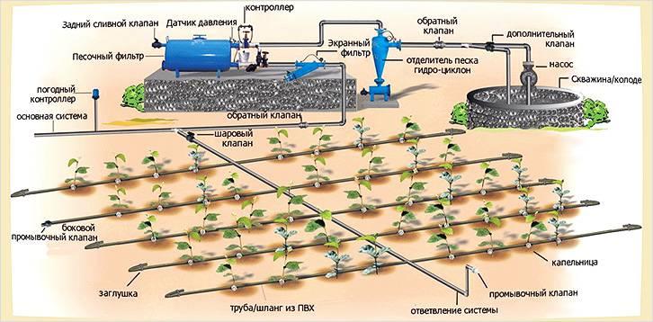 Схема организации капельного полива в теплице