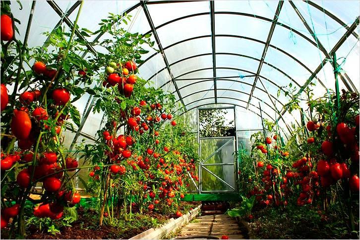 Теплица из поликарбоната обеспечит хорошую урожайность
