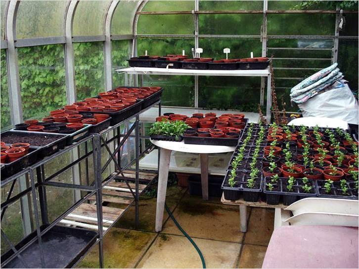 В теплице можно установить полочки для выращивания разных культур