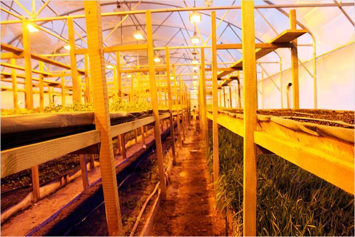 Хорошее освещение в теплице — залог хорошей урожайности