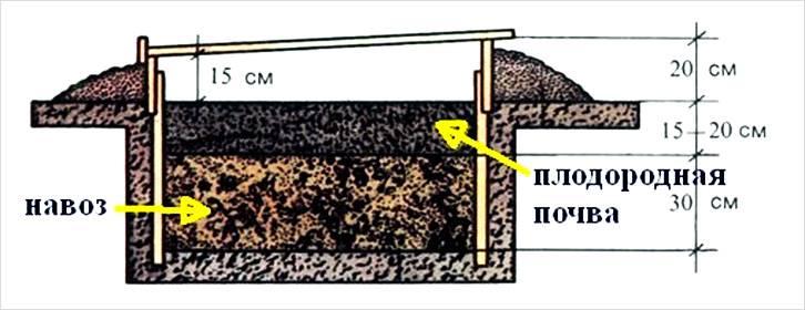 Выбранное место для теплицы должно иметь плодородный слой. Желательно почву удобрить