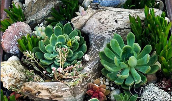 Используйте низкорослые растения