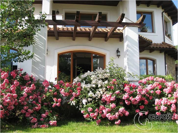 Розовые кусты перед домом
