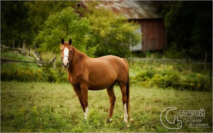 Лошадь подскажет, где искать воду